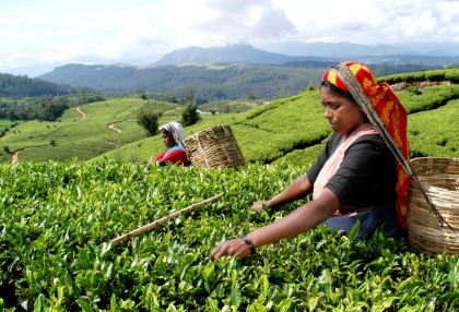 FIRST FLUSH DARJEELING TEAS - TRACING THE JOURNEY FROM LEAF TO CUP